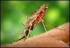 Malaria Welkom pagina