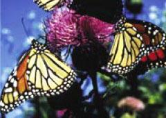 Biodiversity (MA) home