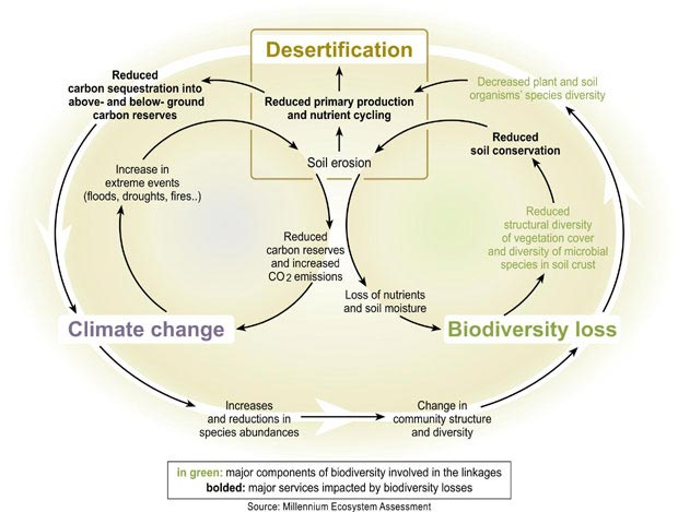 Schematic Description of Development Pathways in Drylands
