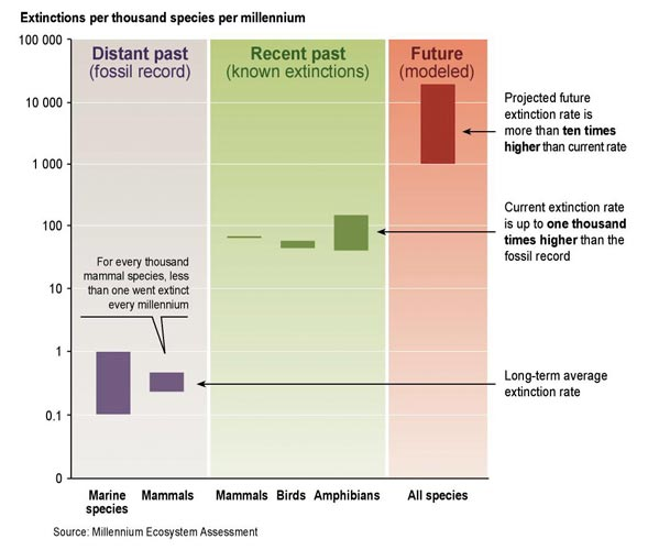 Species Extinction Rates