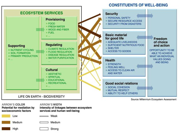 Linkages between Ecosystem Services and Human Well-being.