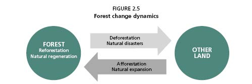 Forest Change Dynamics