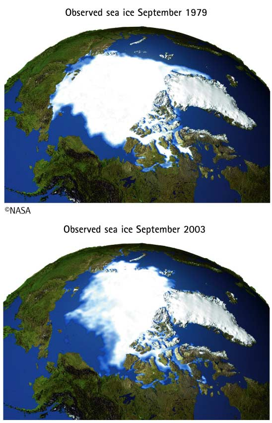 Observed sea ice