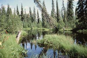 Kanuti National Wildlife Refuge, Alaska