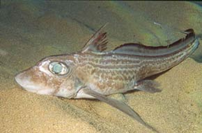 http://www.greenfacts.org/glossary/images/chimaera.jpg