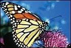 Biodiversiteit (MA) Welkom pagina