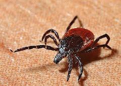 Lyme Disease home