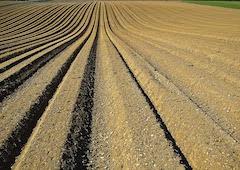 Soils degradation home