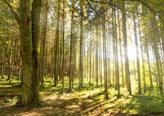 Forêts Page d'accueil
