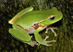 Biodiversiteit (CBD) Welkom pagina