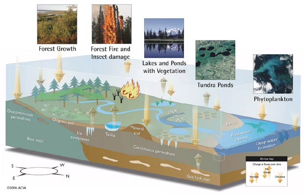 Carbon cycle in the Arctic