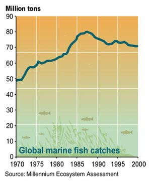 Global marine fish catch