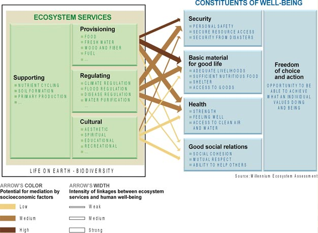 Ecosystem services - Constituents of well-being