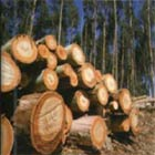 Logging can be sustainably managed