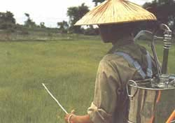 Pesticide rice, Laos