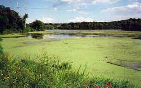 Algae bloom in Mounds Dam impoundment caused by eutrophication.